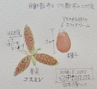 #ネイチャー・ジャーナル #Naturejournal 2018.5.2(水)曇のち雨@路傍 - スケッチ感察ノート (Nature journal)