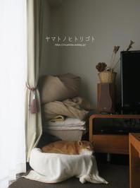 柴犬が、柴犬の動画を見る。 【動画あり】 - yamatoのひとりごと