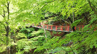 迫力の吊橋@小中大滝 - e-voyage