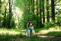 ラッキーサンデー、森のお散歩と偶然のこんにちは! - まみみ暮らし