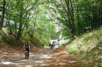 新緑アーケードのサイクリングロード - 照片画廊