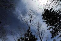 残雪の森 - memory