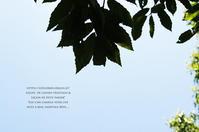 サツマイモの苗を植えに。 - *ユヌアネモヌの薬草ノート*