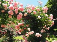 ハートをかたどる、つるバラのアーチ - 神戸布引ハーブ園 ハーブガイド ハーブ花ごよみ