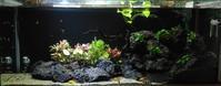 生体&水草追加 - もらった植物を育ててみた。けど、今はアクアリウムが面白い!