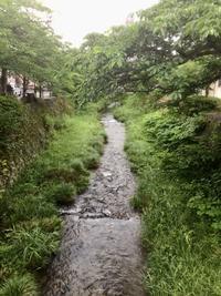 6月...歩いて、食べて、温泉に入って、蛍を見て - coco diary 山口県 お花と絵と楽しいティータイム