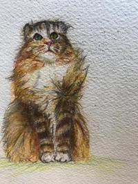 一日一絵   ひとさまの猫 シリーズ - ~メインクーンと一緒~デナちな日々