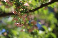 まゝに/6月の散策2.赤城自然園 - Maruの/ まゝに