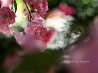 アカオハーブ&ローズガーデンへ - Photographie de la couleur