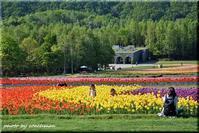 チューリップ・すずらんフェスタ 2 (滝野すずらん丘陵公園) - 北海道photo一撮り旅
