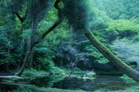 Green - My Palpitation