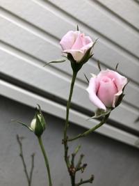 可愛いのは名前だけ♡ - ステキな暮らしLabo.