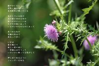 新しい道 - 花の咲み、花のうた、きらめく地上 ―― photo&poem gallery kanon