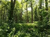 森の緑溢れて - 北緯44度の雑記帳