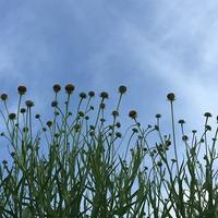 雨が少ない梅雨の季節 - ソーイングルーム ラ・スールの日々ちくちく