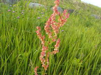 草の花も綺麗 - 冬青窯八ヶ岳便り