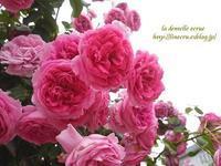 バラと京野菜 - * la dentelle ecrue *