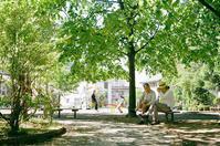 年金が話題の木陰の語らい - 照片画廊