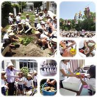 カレーパーティー:じゃが芋掘り&お買い物 - ひのくま幼稚園のブログ