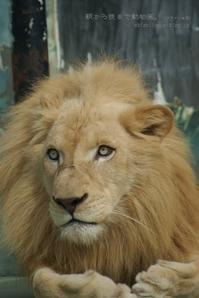 アニバーサリー - 朝から晩まで動物園。(サファリもね)