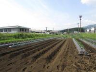 種まき トウモロコシ - 南阿蘇 手づくり農園 菜の風