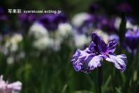 植物園に行く6月-8 - 写楽彩