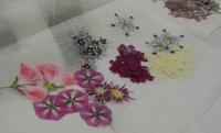 火曜押し花教室、フォトスタイル押し花など - アトリエ・アキ