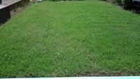 クラピア刈り2回目 - うちの庭の備忘録 green's garden
