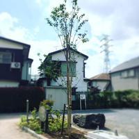 初夏に立つ桜の木の下で - 我蘭堂(ガーランド)バックヤードへようこそ!