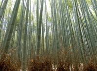 竹のうた*Poem on Bamboo by Hagiwara Sakutaro - ももさへづり*やまと編*cent chants d'une chouette (Yamato*Japon)