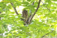 話題だった鳥 - 奥武蔵の自然