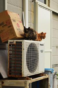 旅路の猫たち - ちわりくんのありふれた毎日II