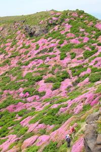 2018年阿蘇高岳のミヤマキリシマ - 気ままにPHOTO