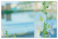 梅雨入りの知らせ。 - Yuruyuru Photograph
