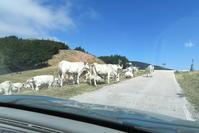 不思議なイタリア自動車税と山で子牛が通せんぼ - イタリア写真草子 Fotoblog da Perugia