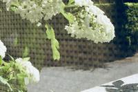 おじぎの上手い花 - 赤煉瓦洋館の雅茶子