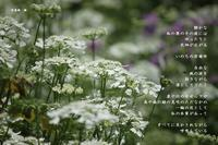 居場所 - 花の咲み、花のうた、きらめく地上 ―― photo&poem gallery kanon