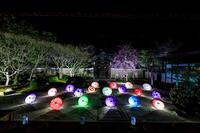 桜咲く京都2018妙顕寺ライトアップ - 花景色-K.W.C. PhotoBlog