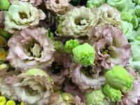 切花の入荷情報です♪♪ - ブレスガーデン Breath Garden 大阪・泉南のお花屋さんです。バルーンもはじめました。