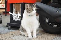 【吾輩は猫】道後温泉ハイカラ通りの看板ネコさん - SAMのLIFEキャンプブログ Doors , In & Out !