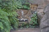 ドクダミ王子 - 動物園へ行こう