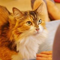 美猫だにゃー @大阪・心斎橋 猫カフェCAT TAIL - たんぶーらんの戯言