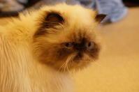 ぶさかわ猫 @大阪・心斎橋 猫カフェCAT TAIL  - たんぶーらんの戯言