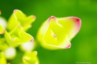 この時期の花・・・紫陽花 - ショーオヤジのひとり言