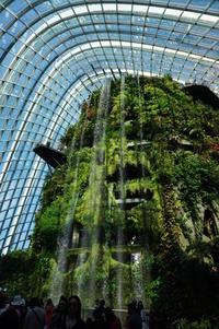 GWシンガポール~5月5日ガーデンバイザベイ☆フラワードーム18 - Let's Enjoy Everyday!