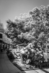 梅雨入り前の街路樹に群がる光蜥蜴 - Silver Oblivion