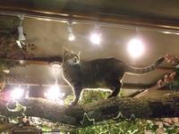 田尻久子「猫はしっぽでしゃべる」 - ネコと文学と猫ブンガク