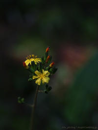 小さすぎる - M2_pictlog