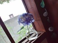 紫陽花・どくだみの化粧水 - ないものを あるもので