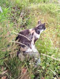 植物園散歩④ - 愛犬家の猫日記